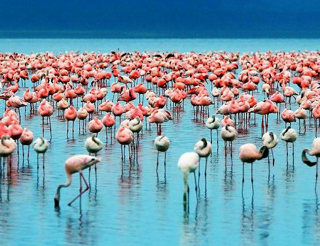 Safari til Tanzania