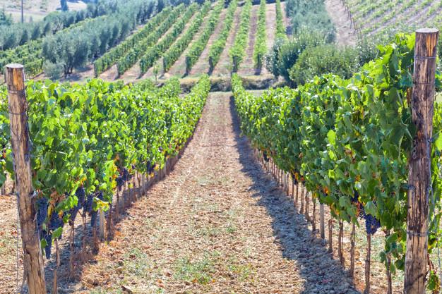 Husk at forkæl dig selv med en lækker Ripasso vin