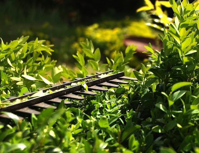 Få en smuk og nydelig have