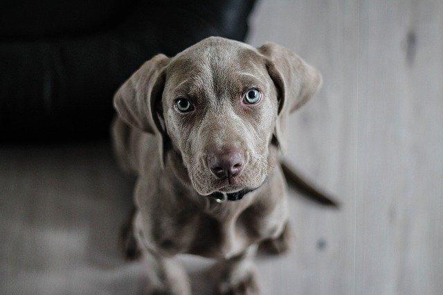Sådan finder du en hundetaske, der passer